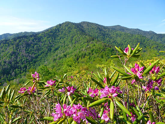 Mount Le Conte from Brushy Mountain